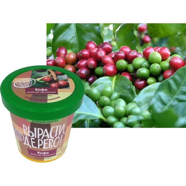 Набор для выращивания Вырасти, дерево! Кофе арабский карликовый zk-012m Зеленый капитал