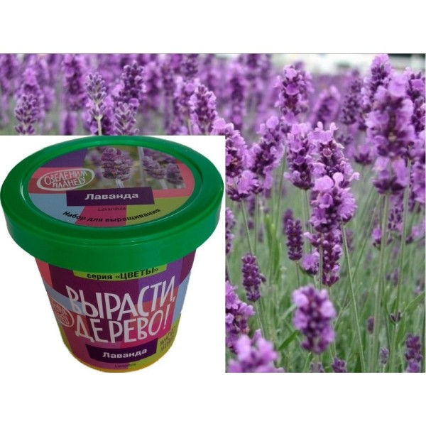 Набор для выращивания Цветы Лаванда zk-030m Зеленый капитал